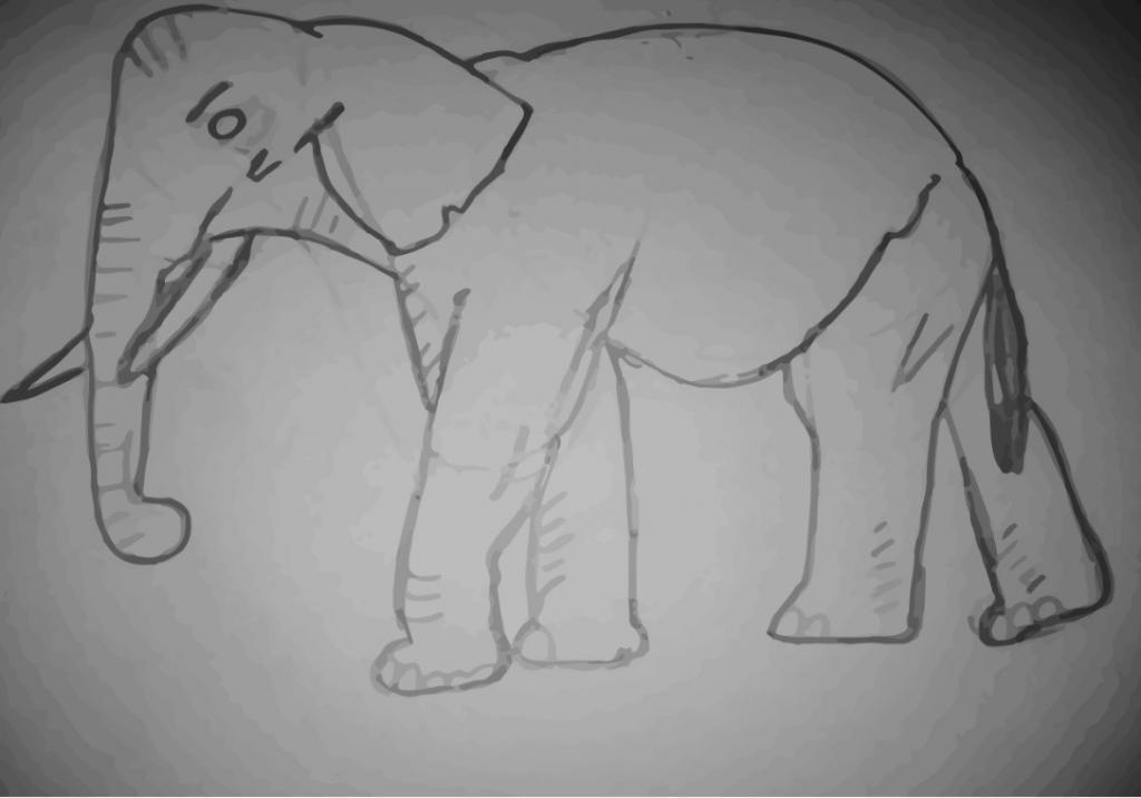kůže slona
