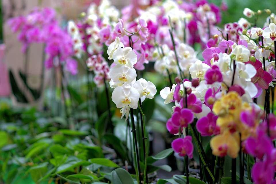 Výběr orchidejí